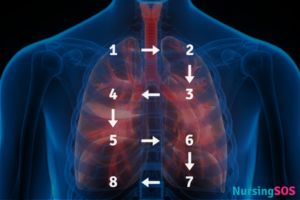 Auscultation Lung Sounds Placement