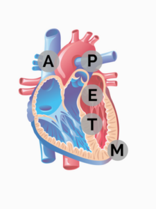 APETM Valves of the Heart
