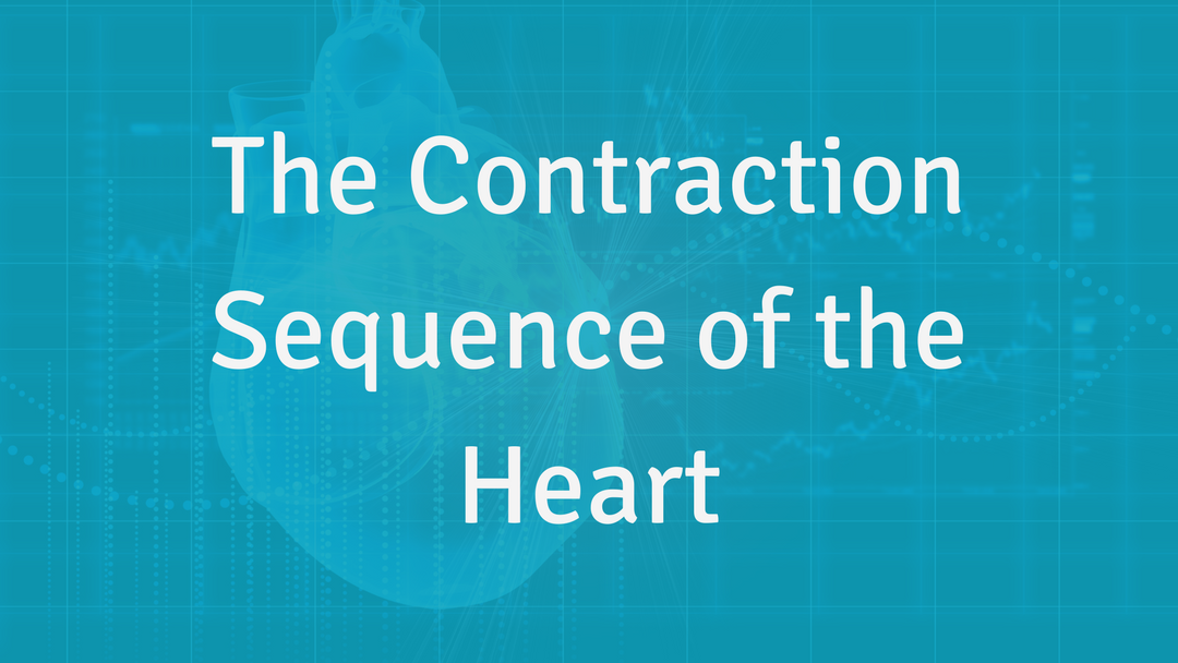 The Contraction Sequence of the Heart